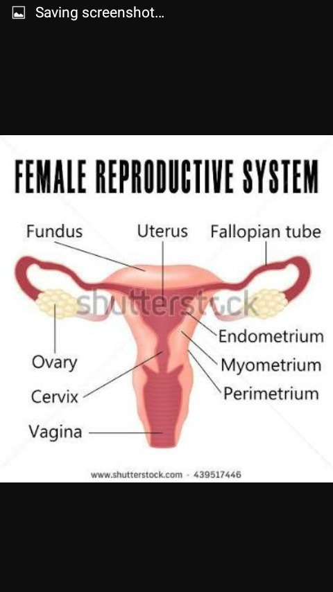 Draw a sectional view of human female reproductive system and label thats the diagram of female reproductive system ccuart Choice Image