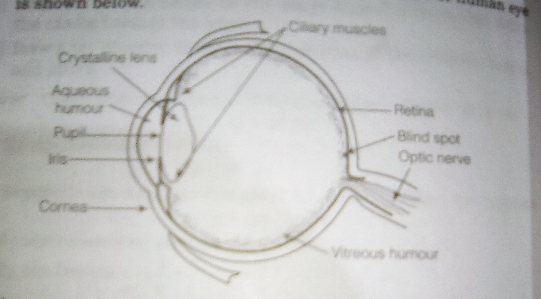 Explain The Structure Of Human Eye With Diagram Image Download
