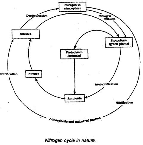 Draw A Flow Chart Depicting Nitrogen And Oxygen Cycle Guys Ill Give