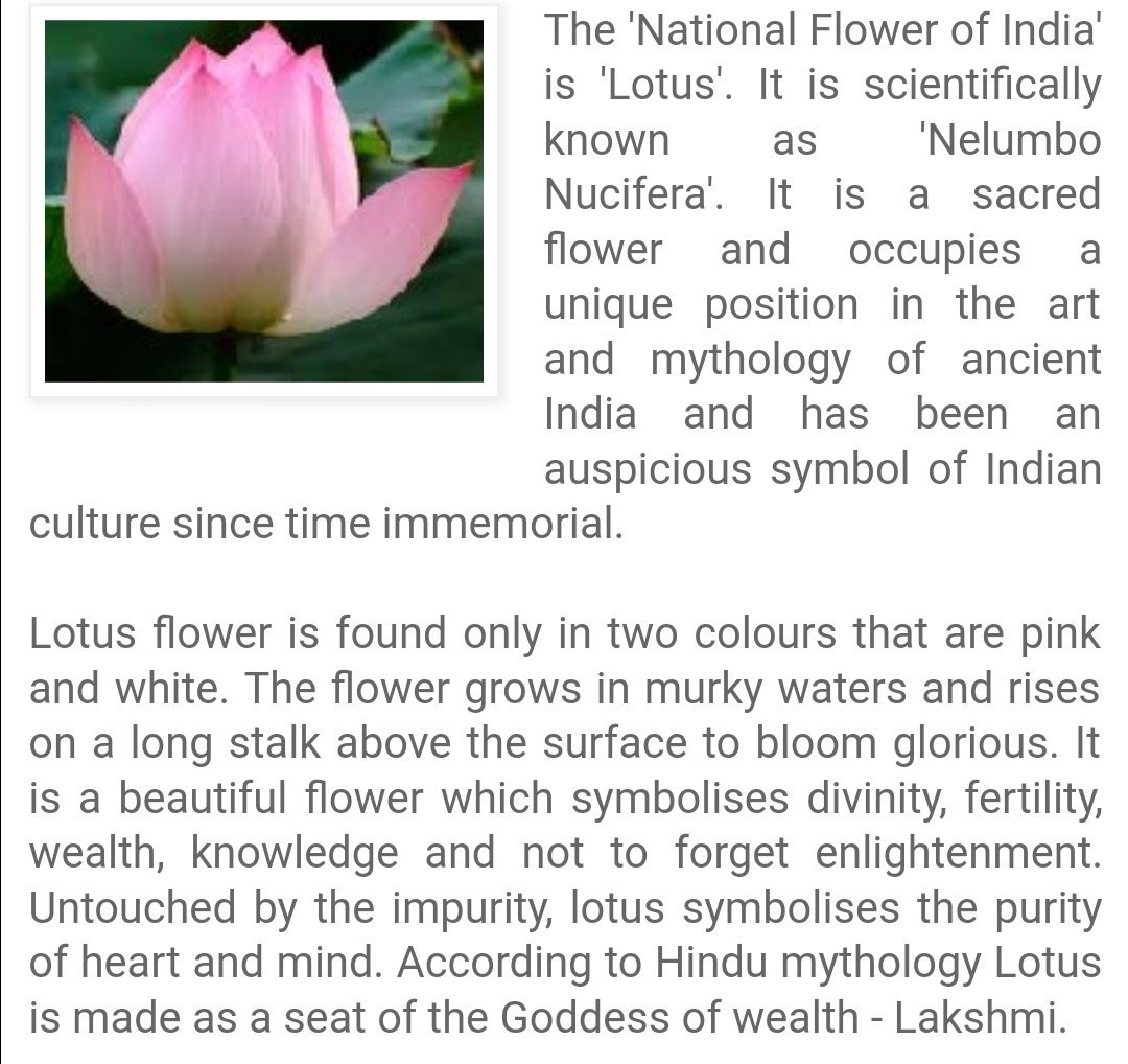 Short Essay On The Lotus The National Flower Brainly