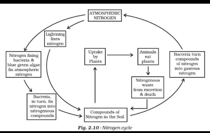 an easy diagram of nitrogen cycle brainly in Easy Evaporation Diagram