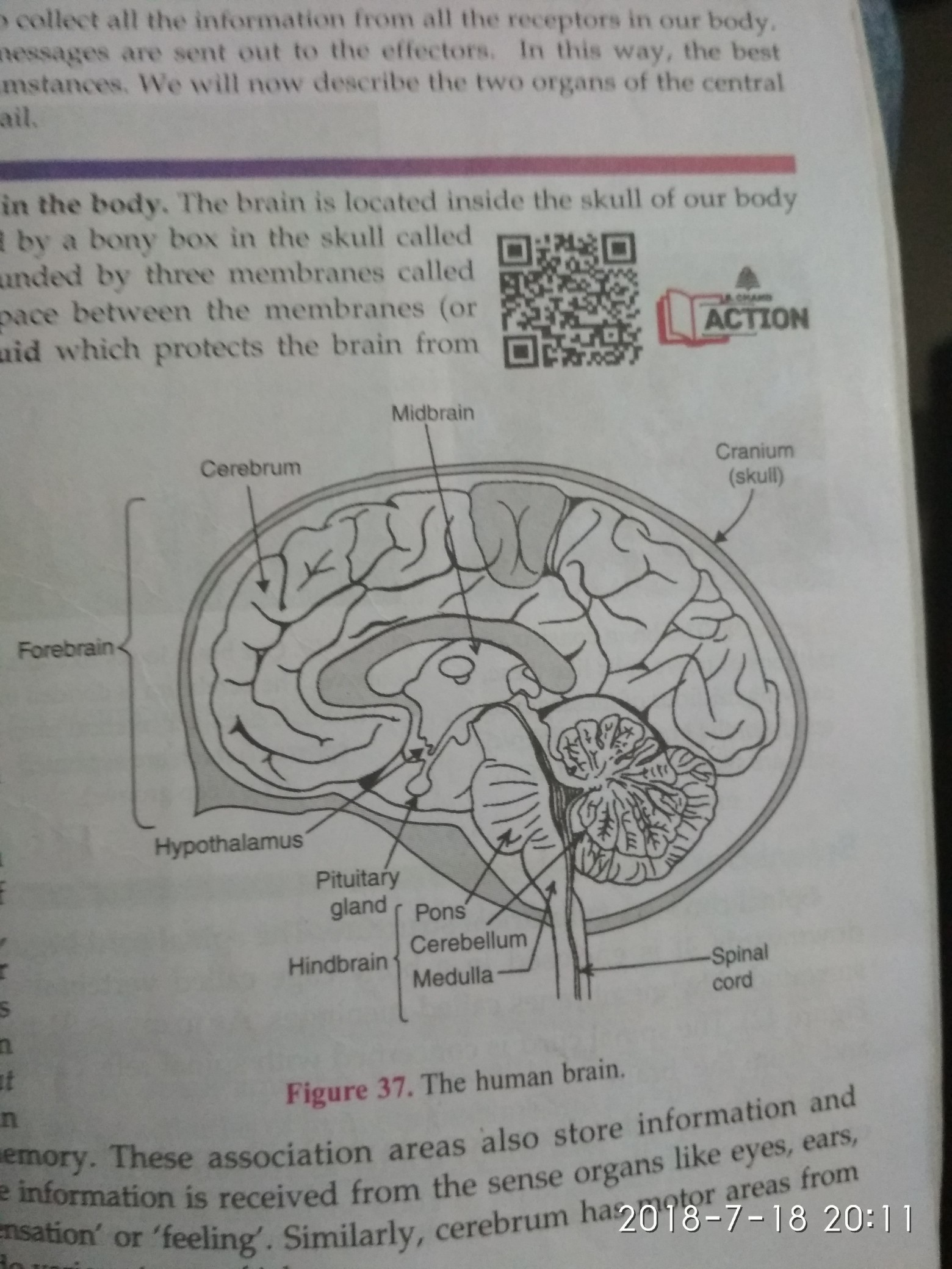 Draw A Neatly Labelled Diagram Of Brain And Write Few Points How It