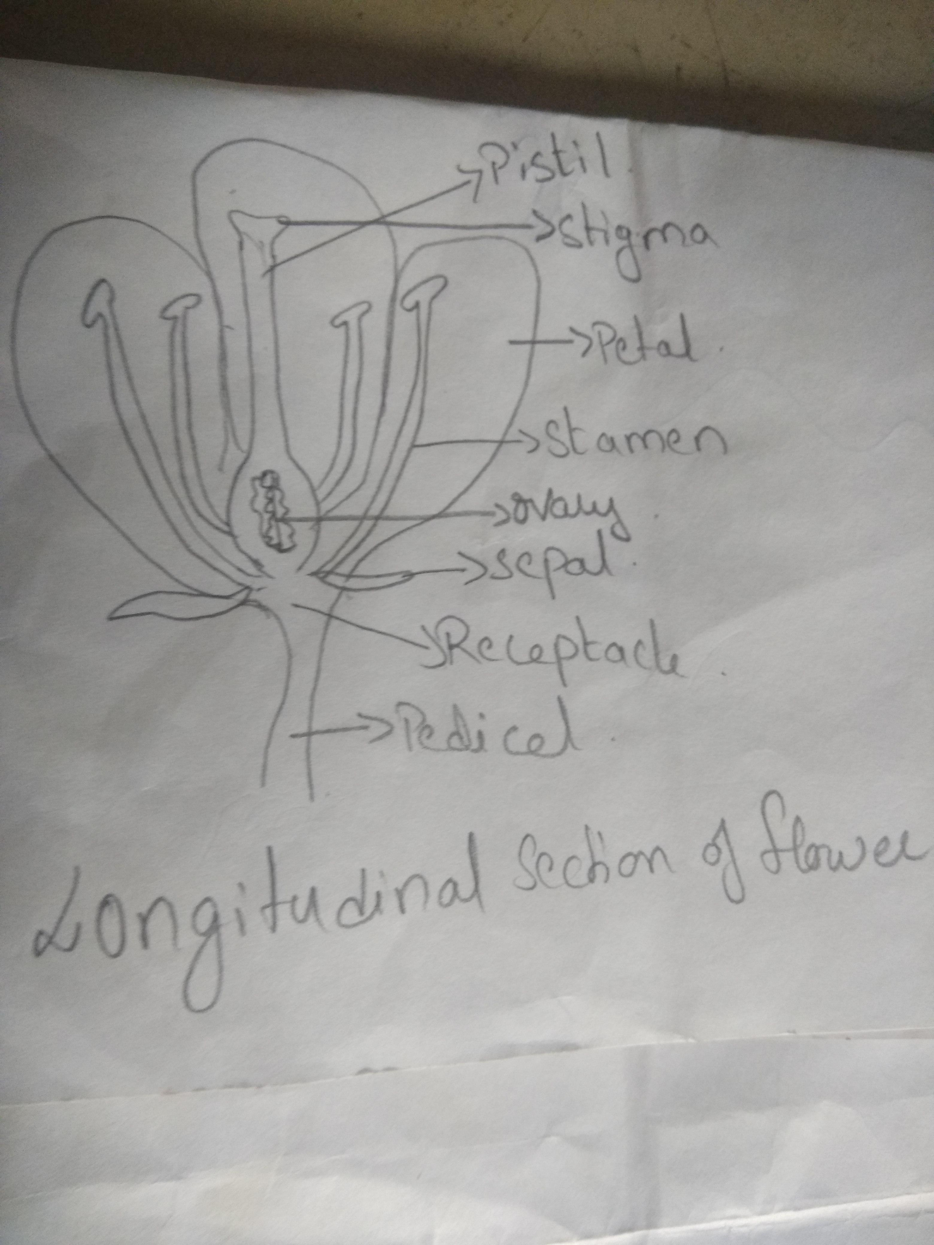 Easy Diagram Of Longitudinal Section Of Flower Brainly In