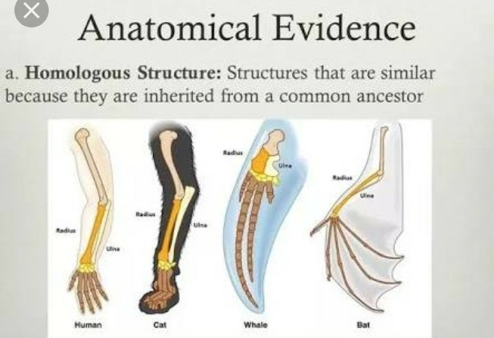 Explain With Example Importance Of Anatomical Evidence In Evolution