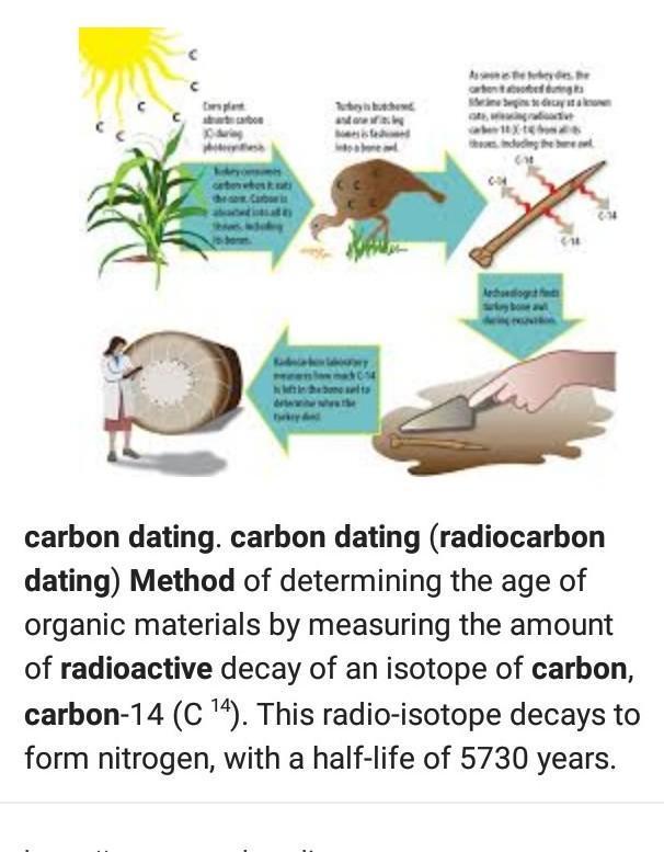 carbon dating method biology