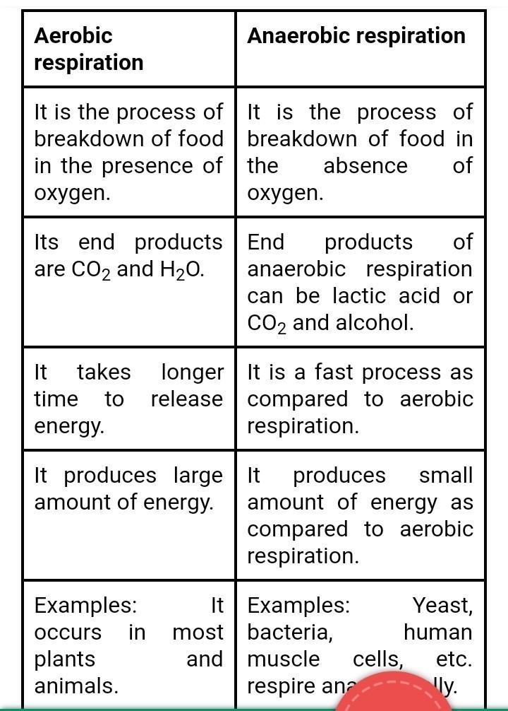 anaerobic aerobic respiration difference