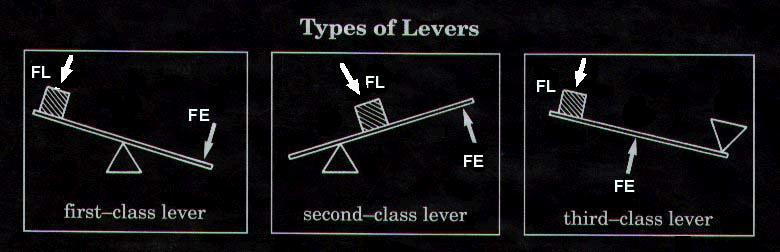 Xplain Me About The First Class Lever Second Class Lever And Third