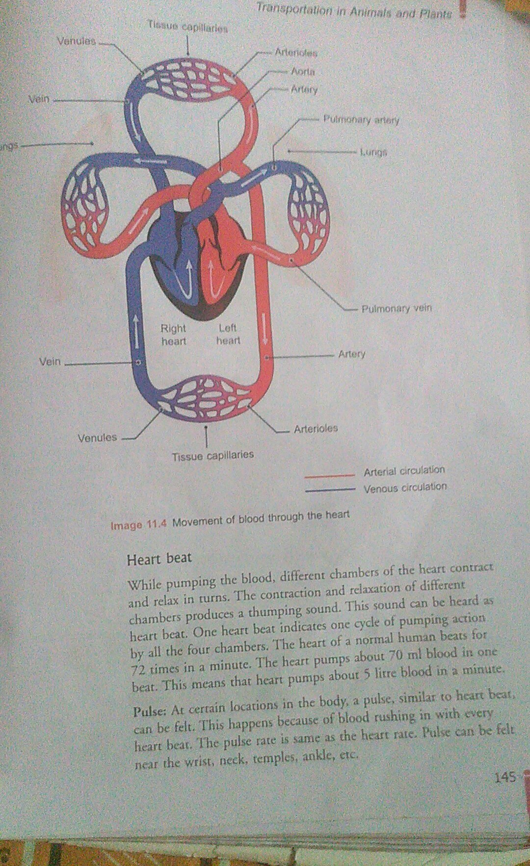 Explain All The Functions And Parts Of Heart With Suitable Diagram