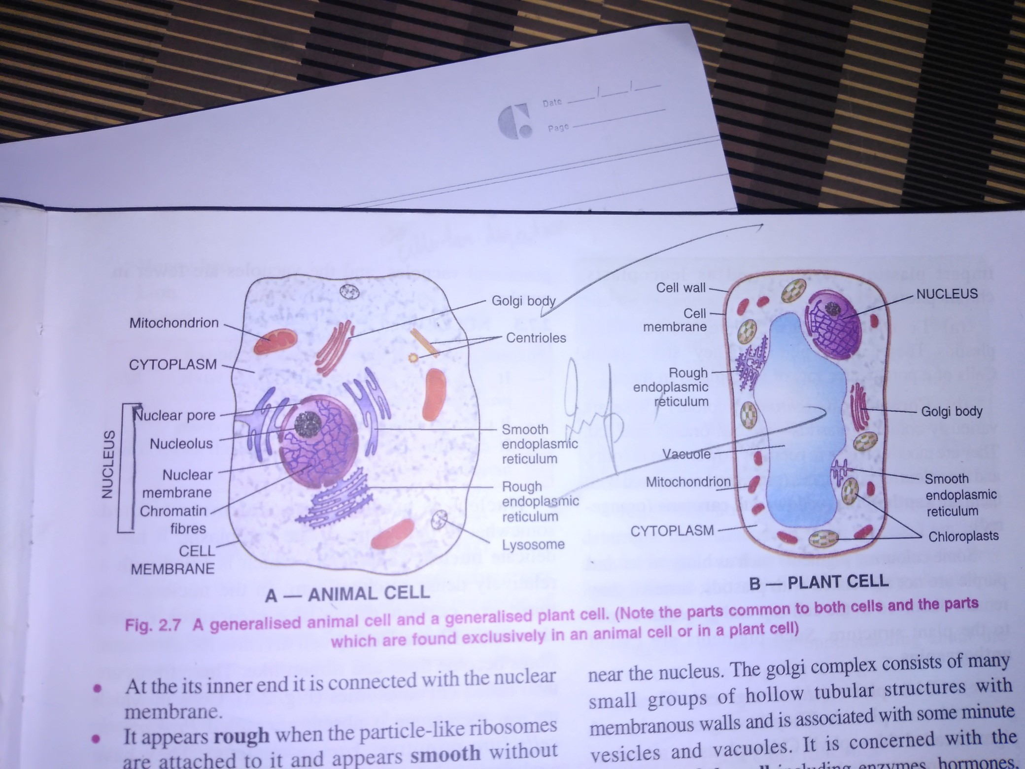 Plant Cell And Animal Diagram Download