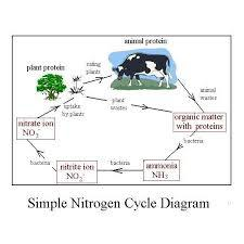 Draw a diagram of nitrogen cycle in labelling brainly download jpg ccuart Gallery
