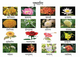 10 flowers name in sanskrit brainly download jpg mightylinksfo