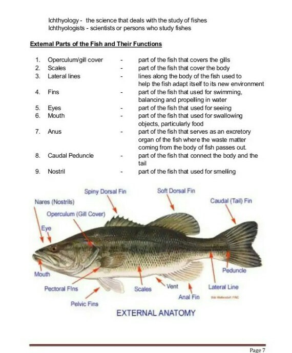 draw a labelled diagram of bony fish and write the function of the ...