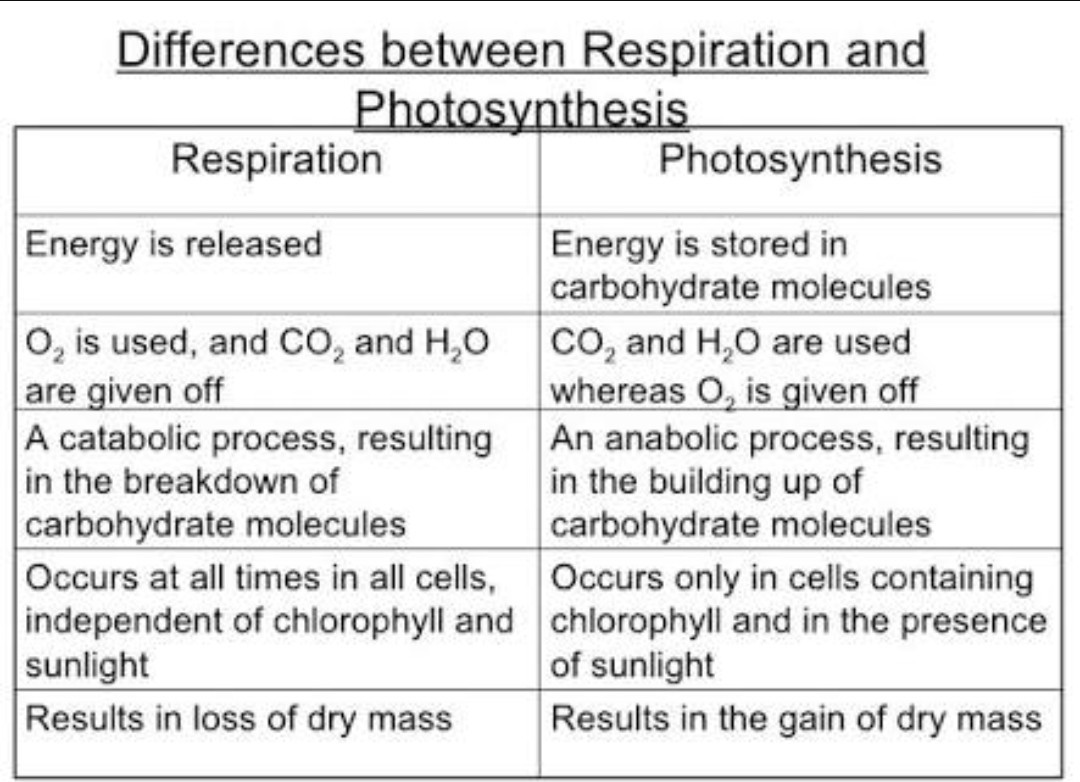 Difference and between respiration photosynthesis