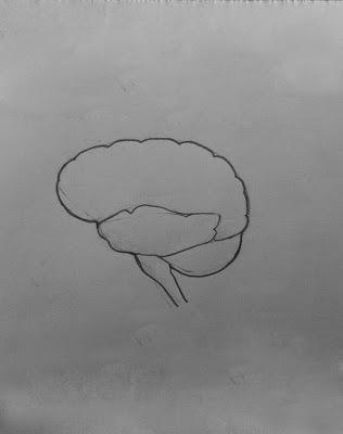 Easy Brain Diagram 41 Bl Fotografie De
