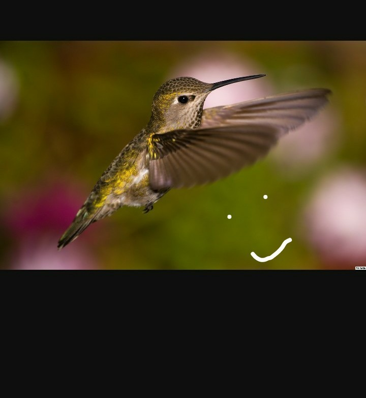 5 lines about Hummingbird in ndi - Brainly in