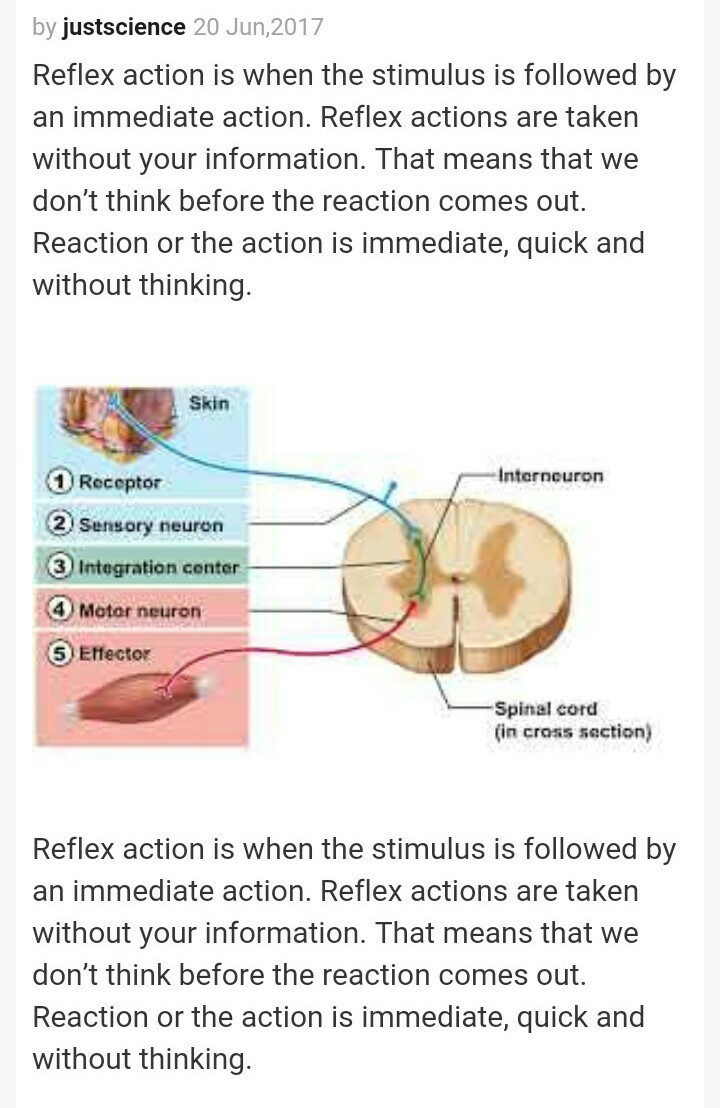 With a neat and labelled diagram explain reflex action and reflex download jpg ccuart Choice Image