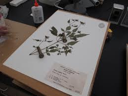 How To Make A Herbarium File Brainly In