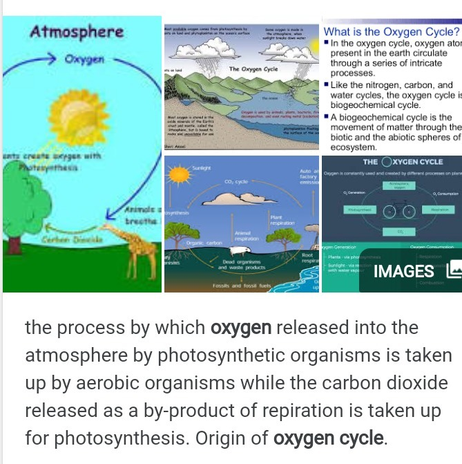 what is the product of photosynthesis along with oxygen