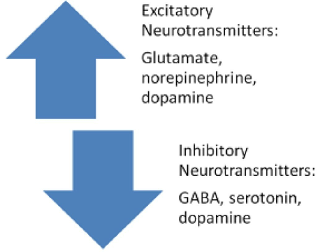 list of excitatory and inhibitory neurotransmitters - brainly.in