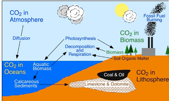Explain the carbon cycle with the help of a diagram brainly download png ccuart Gallery