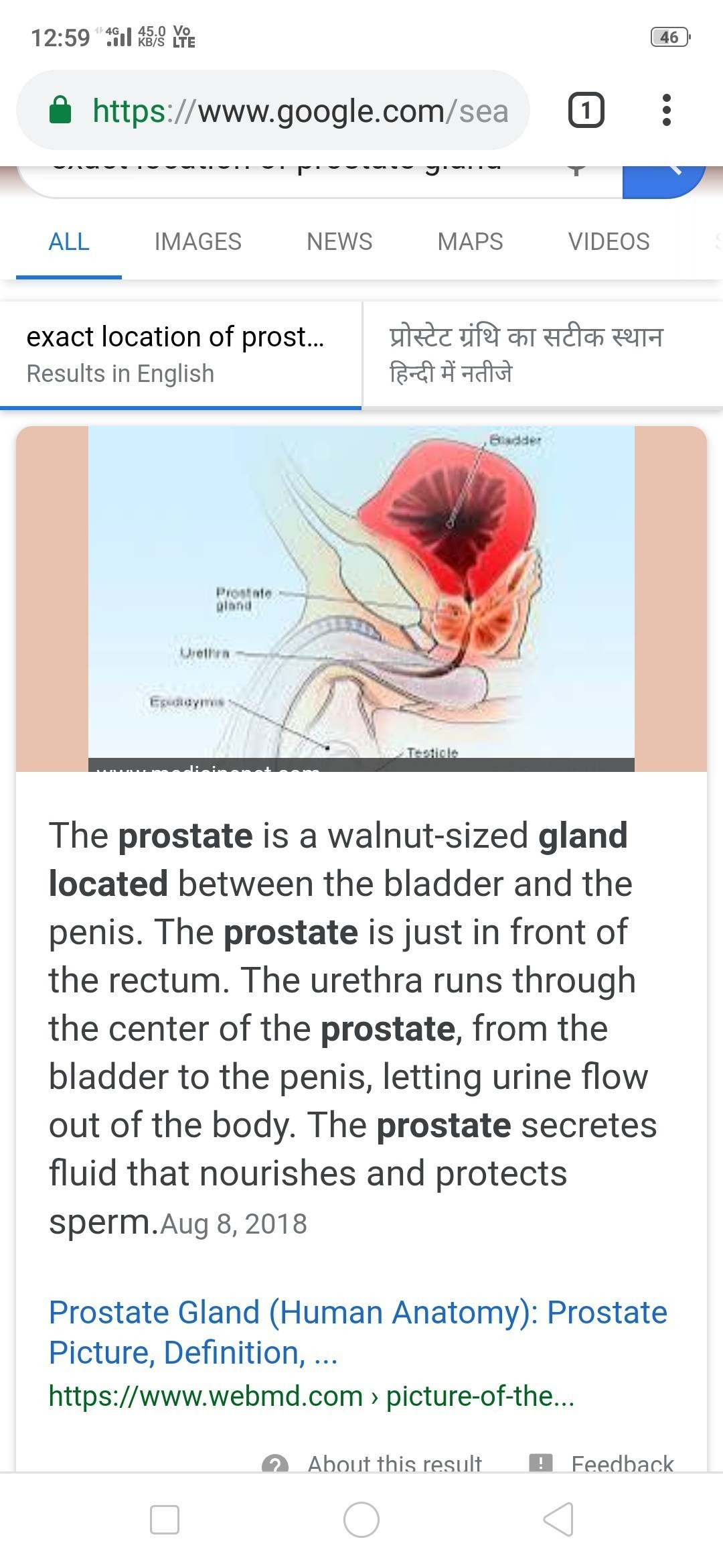 Exact Location Of Guard Cells Prostate Gland Amnion Brainly