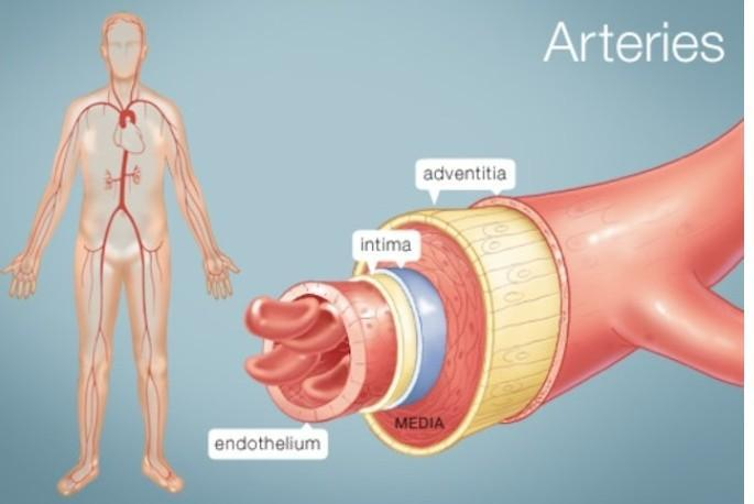 Differance between artery vein and nerve tamil meaning