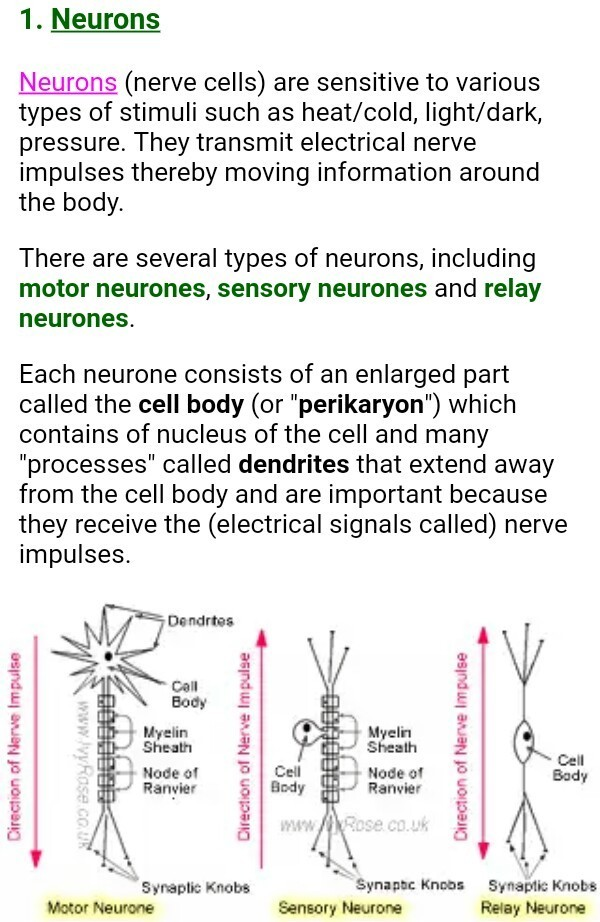 What Is Nervous Tissue Draw A Well Labelled Diagram Of Neuron