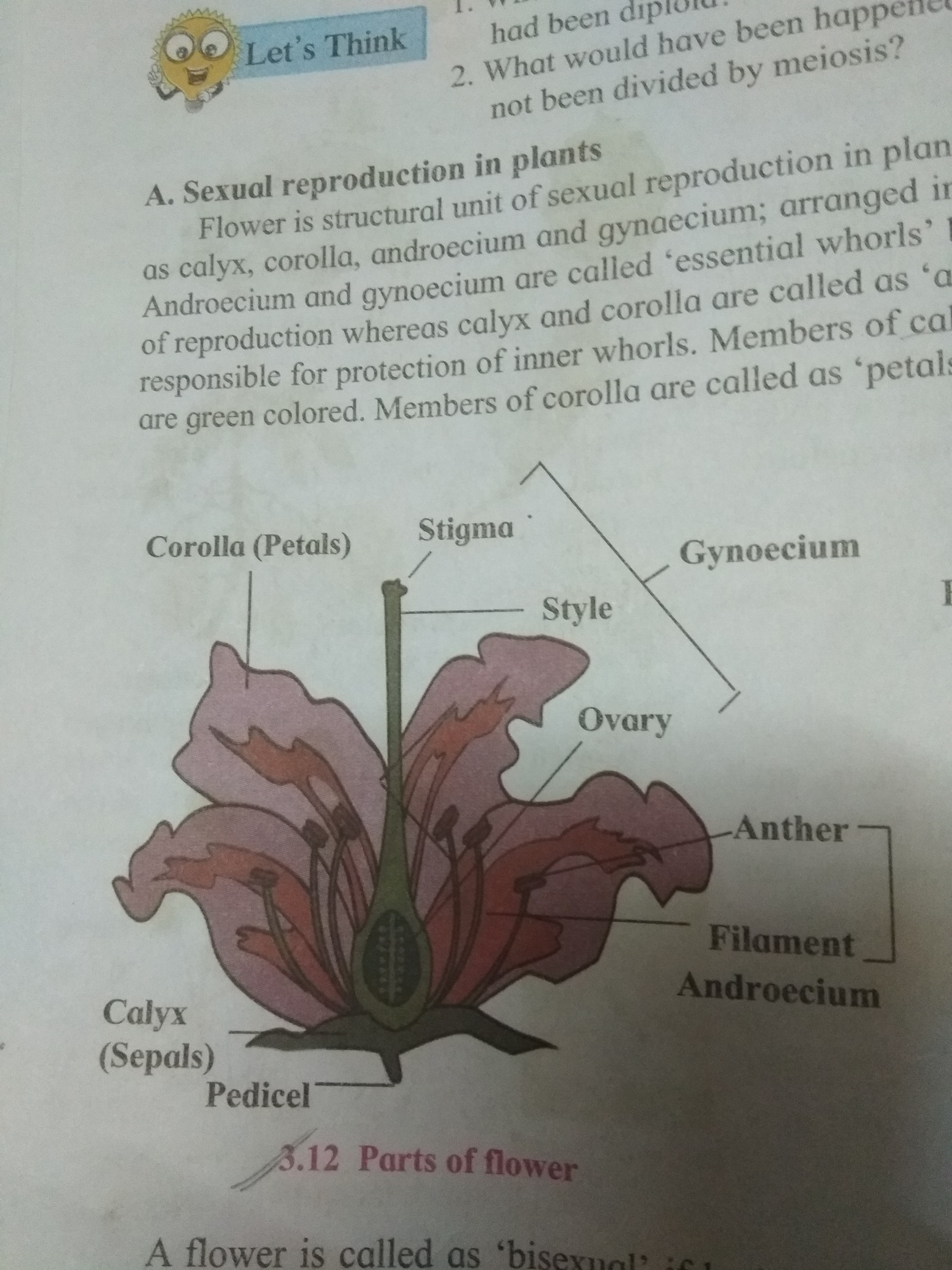 Draw A Diagram Of The Longitudinal Section Of A Flower And