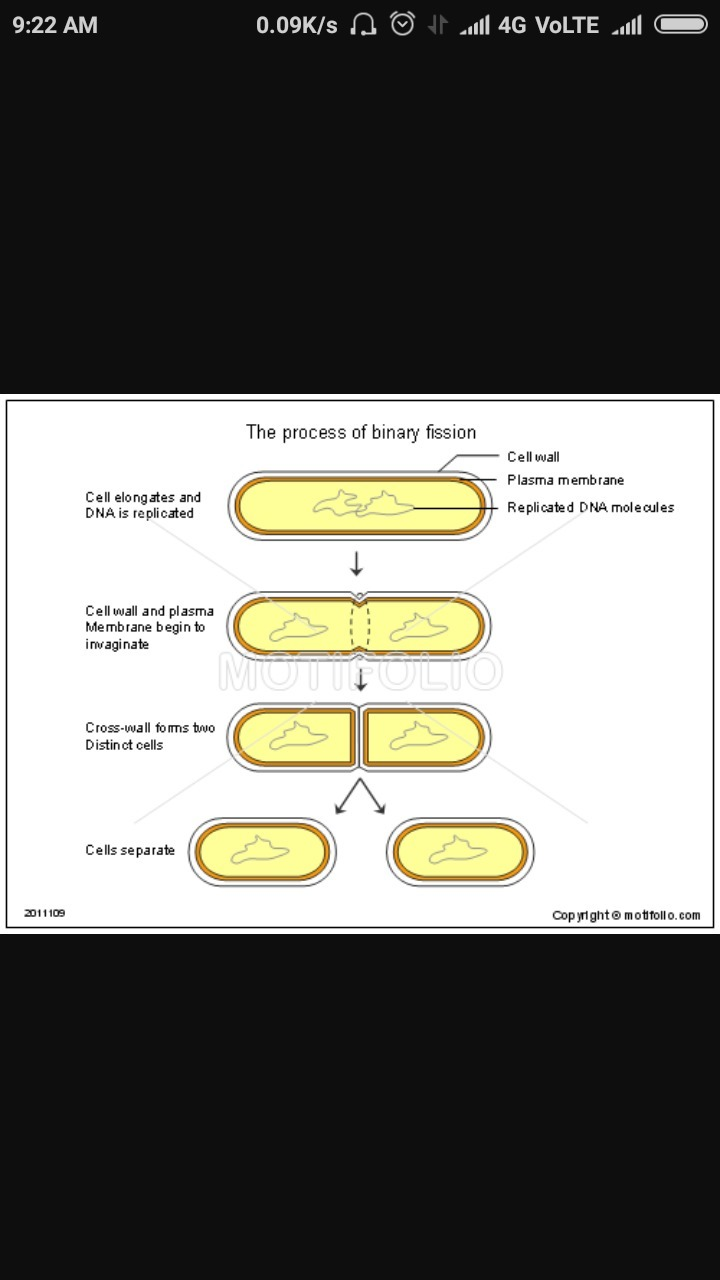 explain the process of binary fission in amoeba with diagram Fission Chemistry download