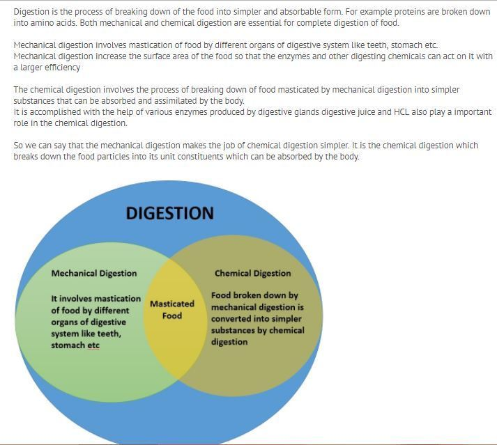 Compare and contrast mechanical and chemical digestion on a venn download jpg ccuart Image collections