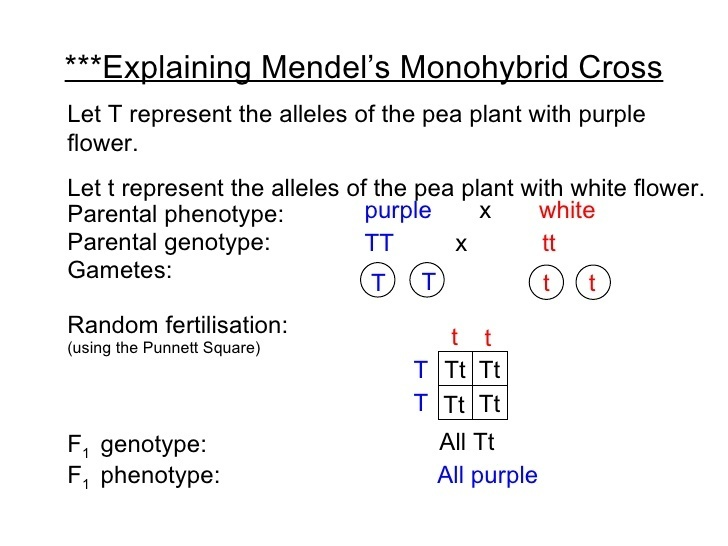 what is monohybrid cross? Define. - Brainly.in