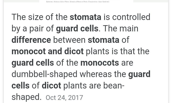 name the cells seen on either side of the stomata  how does