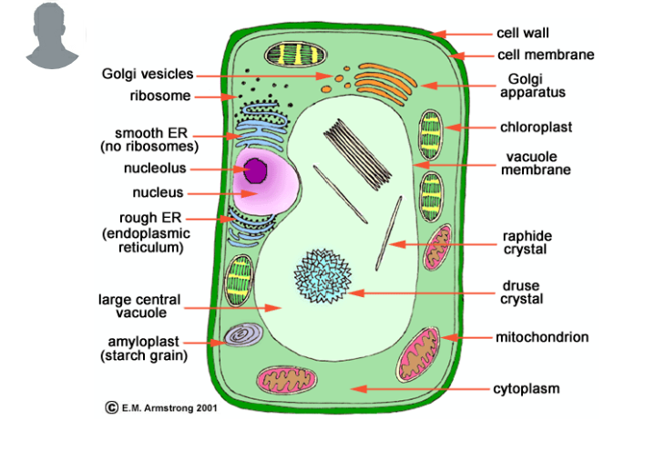 Draw the labelled diagram of the following bacterial cell animal answers sanakhan6 beginner this is the diagram of plant cell ccuart Gallery