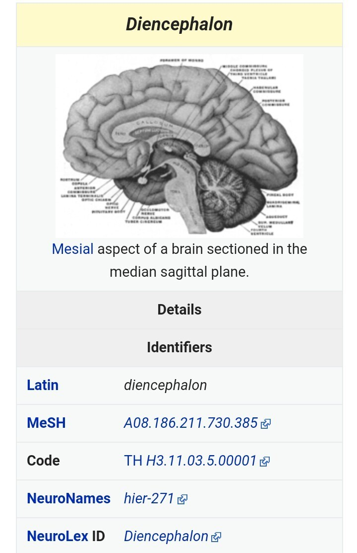 What is Diencephalon ? pls give urgent . - Brainly.in