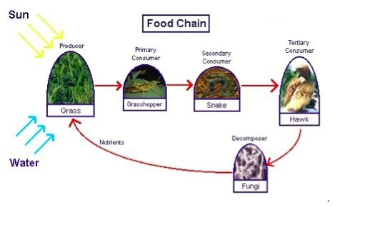 construct the food web with the following grass plant ...