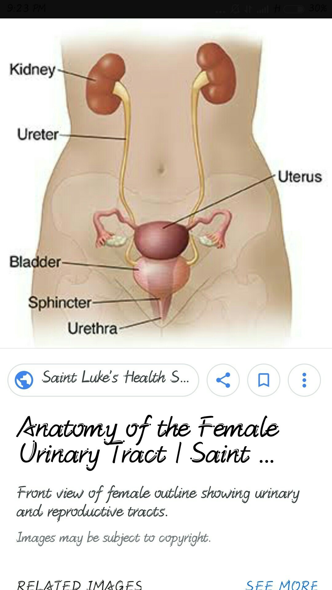 An Explanation And Image Of Female Excretory System Brainly