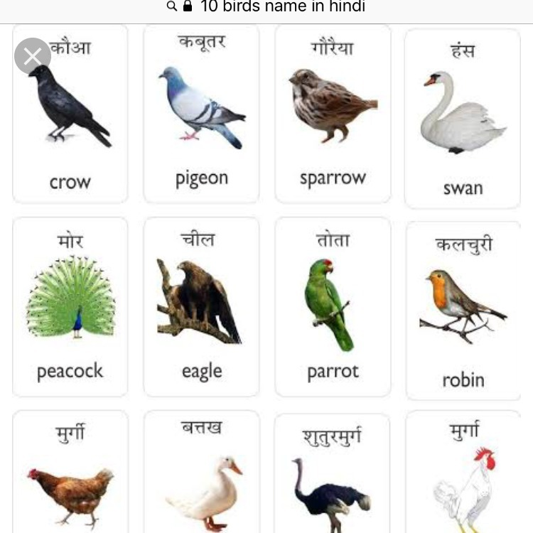 10 Birds Name In Hindi Brainly In