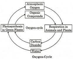 flowchart diagram for oxygen cycle , carbon cycle and ...