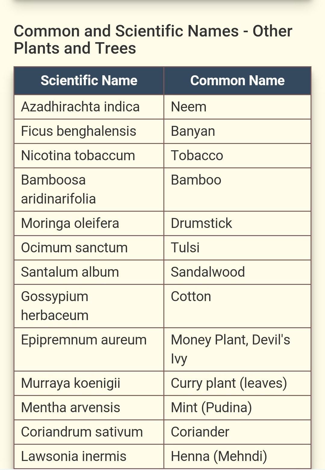 Scientific Name Of Plants Brainlyin