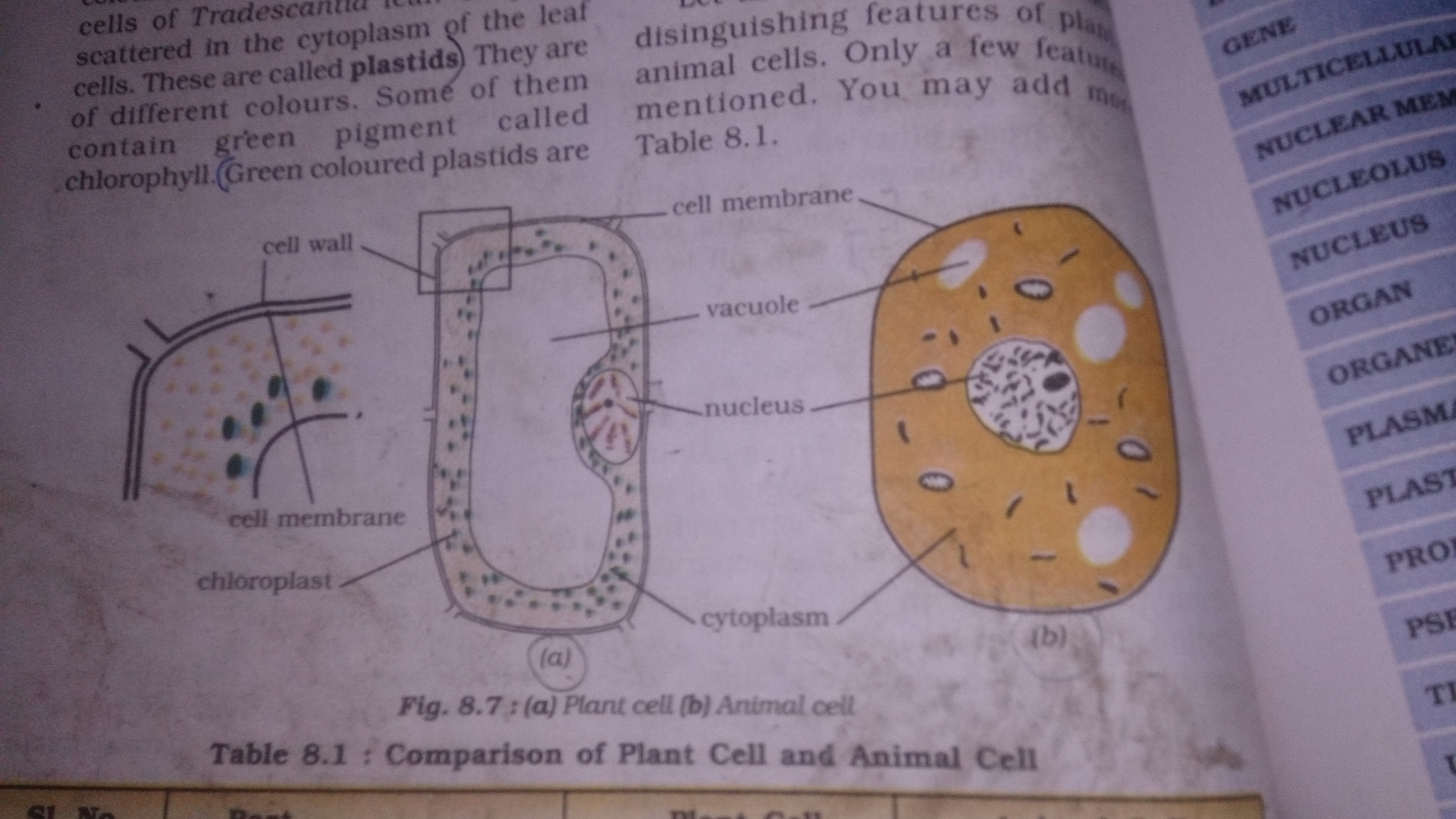 Could yu give a well labelled diagram of plant cell,animal ...